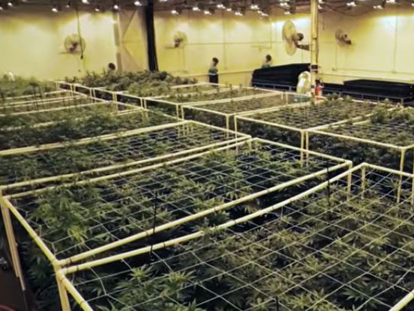 Cannabis grow room air conditioning